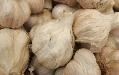 Antibiotici naturali: come curarsi con aglio, cannella e simili